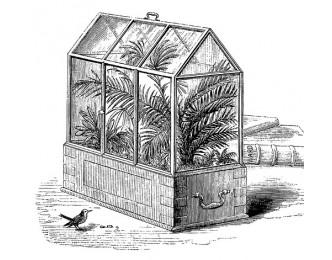 Как появились флорариумы?