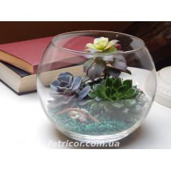 """Флорариум """"Природный баланс"""""""